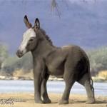 Donkeyphant